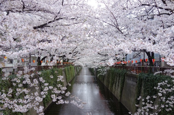 目黒川 (2).jpg