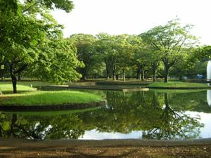 代々木公園 (11).jpg